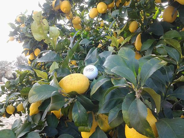 La Balle est en visite dans la région d'Alentejo, au Portugal. Quand on vous dit qu'au BISA, on en a dans le citron… Une contribution d'Ana Azinheirinha